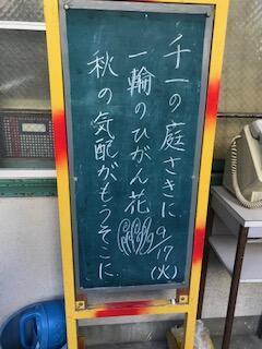 9月彼岸花.jpg