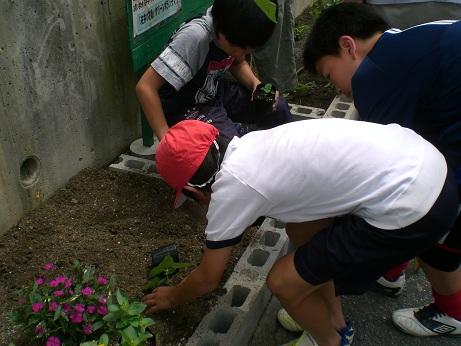 佐井の花植え7月2.jpg