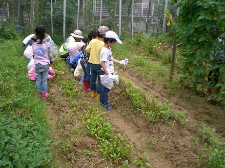 夏野菜 6.JPG