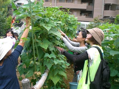 7月14日 夏野菜を植えよう2.JPG
