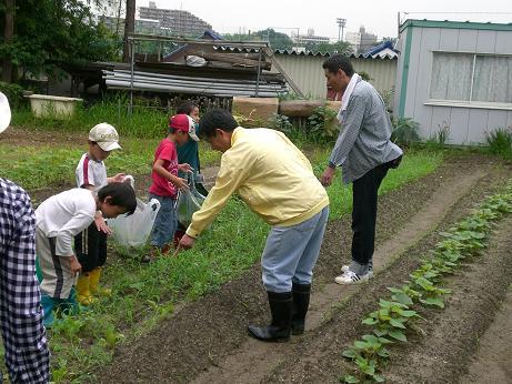 7月14日 夏野菜5.JPG
