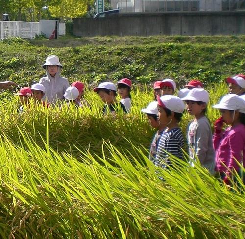 稲刈り3.jpg