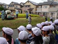 5稲刈り1.jpg