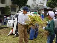 5稲刈り5.jpg